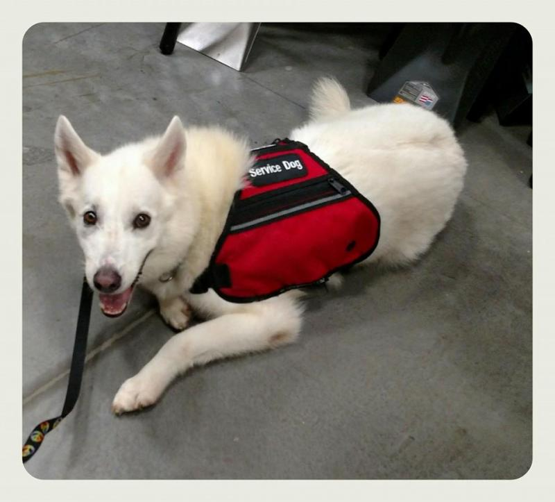 Moby placed as a service dog in Hawaii.  Service dogs available on Oahu, Hawaii